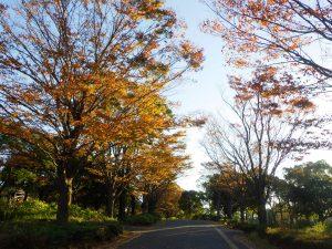 楓 吉野公園